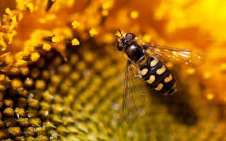 Arıcılara Sonbahar Bakımı Uyarısı